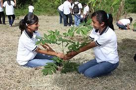 arboretumplanta