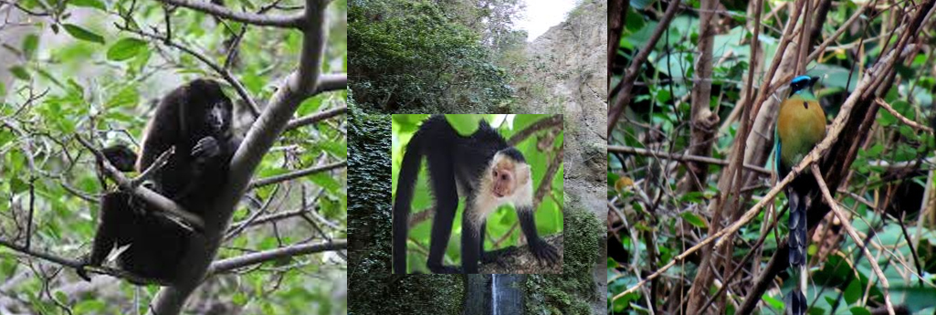 managua tour chocoyero el brujo reserva fauna monos