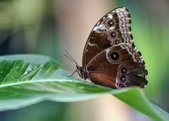 mariposap